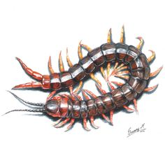 Centipede by Sunima. Not really a Tokyo Ghoul fan art but it's related! Lol.