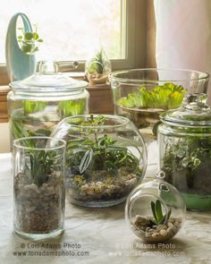 Here are the terrariums in the step-by-step chapter of my book! Have so much fun!