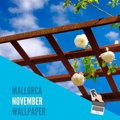 Blue Sky Santanyí Hola Noviembre Hallo November Hello November Mallorca wallpaper by Rayaworx Coworking ... Download rayaworx.eu/rayaworx-mallorca-wallpapers (Link in bio - Link im Profil) ... . #mallorca #wallpaper #relaxandwork #bluesky #novemberhimmel #himmelübermallorca #rosenspalier #november #wallpapers #kalender #igersmallorca #igersabalears