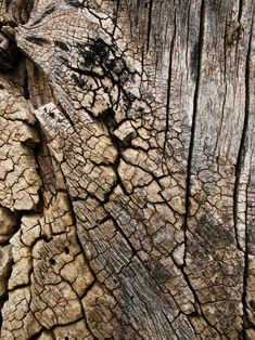 texture / arbre / écorce