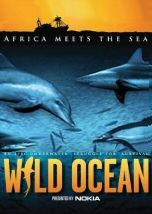 Each year an unbelievable feeding frenzy takes place in the oceans of South Africa as billions of. 3d Film, Virtual Reality Glasses, Kwazulu Natal, Watches Online, Whales, Bait, Oceans, Under The Sea, Documentary