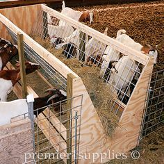 Definitely need this. Our Double-sided or Single-sided Feeder Plan Booklet is FREE when you purchase our wire panels Sheep Feeders, Goat Hay Feeder, Goat Playground, Goat Shelter, Goat Pen, Goat House, Dwarf Goats, Raising Goats, Sheep Farm