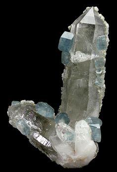 """bijoux-et-mineraux: """"Blue Apatite Crystals on Quartz - Panasqueira Mines, Panasqueira, Covilhã, Castelo Branco District, Portugal """""""