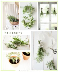 Plant Crush | Rosemary | Vintage Rose Brocante