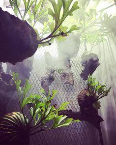  久々のアジトに潜入してます * * #ビカクシダ#コウモリラン#platycerium #plants#bsfi_official #platyceriumjunkie