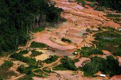 Goudzoekers hebben natuurlijk maling aan de natuur! ~ Golddiggers have of course a damn about nature! Caro