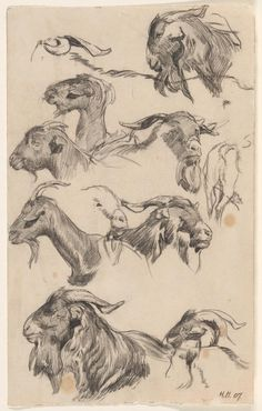 Public and Private Life of Animals, by P. Stahl, illustrated by J. Grandville, and translated rom the French by J. Public and private life of animals Drawing Studies, Art Studies, Animal Sketches, Animal Drawings, Life Drawing, Drawing Sketches, Jacques Callot, Goat Art, Book Illustration
