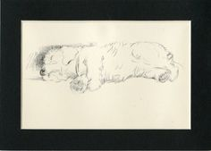 1937 Matted Vintage Dog Print Sealyham Terrier Lucy Dawson Napping Puppy Animal Pet Decor Art Gift Small Dog Sketch Black and White Vintage Dog, Vintage Prints, Pet Decor, Sealyham Terrier, Family Christmas Cards, Pastel Portraits, Cat Cards, Small Gifts, Small Dogs