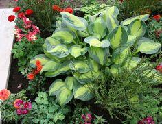 Perennial plants are the backbone of nearly every flower garden. http://gardenseason.com/perennial-plants-gardening/