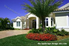 Tropical Landscape Ideas Small Yards | images of tropical front yard palm tree planting ideas wallpaper