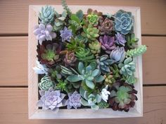 Complete Succulent Wall Art Kit, Comes Assembled With Soil And Moss, 25 Cuttings… Succulent Wall Planter, Vertical Succulent Gardens, Succulent Cuttings, Planting Succulents, Succulent Ideas, Wall Planters, Echeveria, Cactus E Suculentas, Image 3d