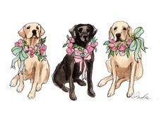 Lovely Labs