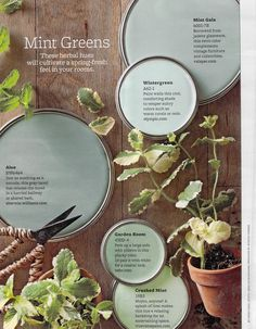 pretty minty green paint colors maybe garden room or crushed mint for the kitchen? Mint Green Paints, Green Paint Colors, Paint Colors For Home, Room Colors, House Colors, Soothing Paint Colors, Mint Green Walls, Bedroom Paint Colors, Paint Color Palettes