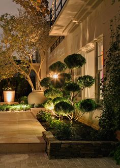 Cloud Pruned Junipers framing front door.  Armadale, Victoria Australia  Anthony Wyer + Associates  http://www.anthonywyer.com