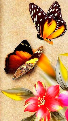 BUTTERFLY BEAUTY❤️