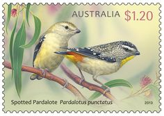 Postage Stamp Collection ~ The Australian Spotted Pardalote. Postage Stamp Collection, Commemorative Stamps, World Birds, Australian Birds, Vintage Stamps, Fauna, Mail Art, Stamp Collecting, Poster