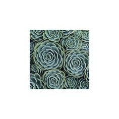Hen & Chicks: Adrienne Adam: Color Photograph - Artful Home ($420) found on Polyvore