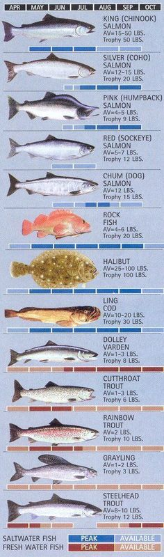 Ketchikan Fishing Calendar - Ketchikan, Alaska www. Alaska Fishing, Fly Fishing Tips, Fishing Quotes, Best Fishing, Kayak Fishing, Fishing Cart, Fishing Stuff, Going Fishing, Ice Fishing