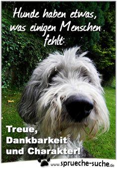 Hunde haben etwas, was einigen Menschen fehlt: Treue, Dankbarkeit und Charakter!