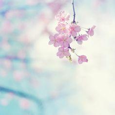 pastel flower #pastel