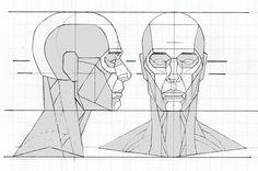 HeadDiagrams6.jpg (700×465)