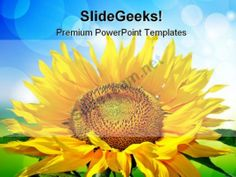 Sunflower Beauty PowerPoint Templates And PowerPoint Backgrounds 0211 #PowerPoint #Templates #Themes #Background