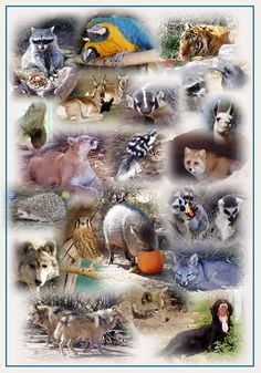 Top 10 Extinct Animals, Amazing Extinct Animals