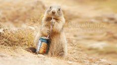 Pocok üdítőt iszik háttérkép képeslap