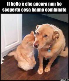 These top 10 funny dogs will make you laugh. Check out this top 10 funny dog videos compilation. mihaifrancu is a channel with funny animals and funny animal Cute Funny Dogs, Cute Funny Animals, Cute Cats, Fun Funny, Stupid Funny, Super Funny Memes, Funny Dog Memes, Funny Pranks, Funny Cartoons