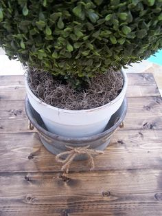 Be creative with topiaries. Put them in plain terra cotta pots and paint, galvanized tubs, and add some moss.