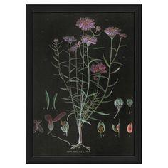 Iberis Framed Print - Midnight in the Garden