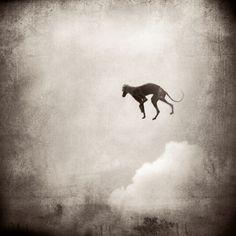 'Flying' by Louviere & Vanessa, BIFB Core Program photographers.