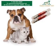 A #microchip implant is an identifying integrated circuit placed under the skin of an animal. The chip, about the size of a large grain of rice, uses passive Radio Frequency Identification technology. For more information, call #YorkStreetVet on 044 874 4060 or visit us in store.https://www.facebook.com/Yorkstreetvetshop/photos/pb.646016452164207.-2207520000.1439134251./813236128775571/?type=3
