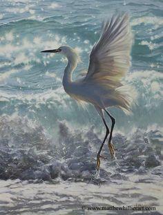 Matthew Hillier - Wildlife & Landscape Artist - Wildlife Gallery