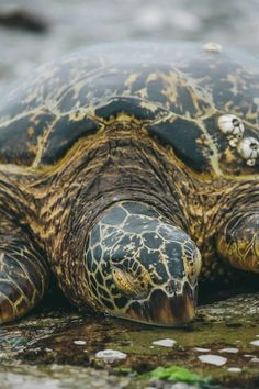 Sleeping sea turtles are quite sleepy. I wonder if they ever snore?
