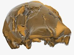 """The truth about the 'Man of Ceprano' has been revealed thanks to a very high resolution computerized micro-tomography scan at the International Theoretical Physics Centre """"Abdus Salam"""" in Trieste that the palaeontologists led by Giorgio Manzi who were able to digitally reassemble the more than 50 fragments that make up the oldest fossil skull discovered in Italy to date."""