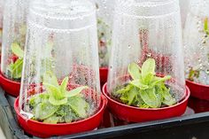 Creating and maintaining a simple indoor greenhouse is a fun DIY activity for the whole family to enjoy all year-round.