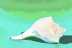 Abstract Shell Photograph  - Abstract Shell Fine Art Print
