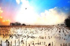 Snowed in field
