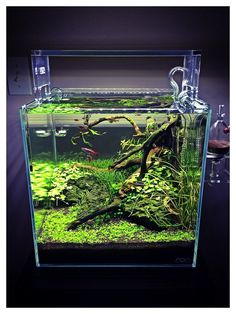 Nano Aquarium, Glass Aquarium, Freshwater Aquarium Fish, Aquarium Design, Aquarium Fish Tank, Planted Aquarium, Aquarium Landscape, Nature Aquarium, Fish Tank Cleaning