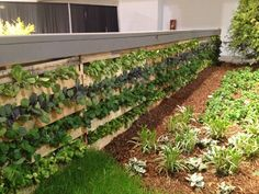 pallet fence - Google Search