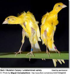 Unusual Mutation Canaries