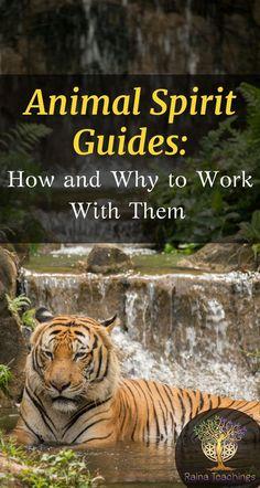 Learn how to communicate with an animal spirit guide | rainateachings #animalspiritguides #spiritualdevelopment #metaphysics #naturespirits