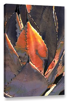 Agave Sunset by Linda Parker Photographic Print on Wrapped Canvas