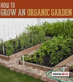 Grow Your Own Organic Garden Even in Small Spaces | Space Saving Techniques and Tricks You Can Use to Grow by Survival Life http://survivallife.com/2015/04/02/grow-your-own-organic-garden-even-in-small-spaces-2/
