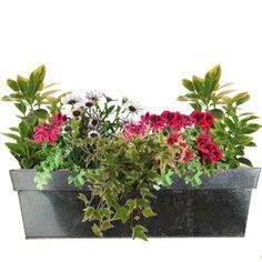 Jardini re fleurie livr e domicile balcon pinterest for Jardiniere pour plante grimpante