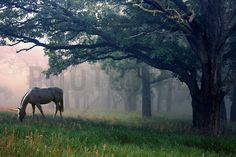 Unicorn in the Forest - Wall Mural & Photo Wallpaper - Photowall