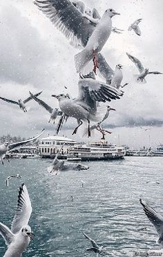 Nature Animals, Animals And Pets, Bosphorus Bridge, Wow Photo, India Street, Amazing Paintings, Best Places To Travel, Abstract Photography, Istanbul