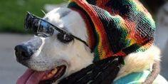 Dogs Love Reggae, New Study Shows . Read more: http://ift.tt/2juxcR5 #MusicNews pic.twitter.com/BnGa2Ag6XW — Music News… http://ibeebz.com