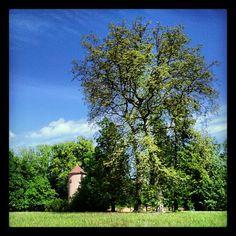 Le bon plan de Pascaline.... pour se promener à #Strasbourg : Le parc de #Pourtalès, pour ses grandes allées où l'on se perd.#Robertsau